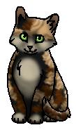 Ракушечка (котёнок)