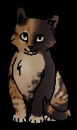 Пятнистая Шкура - котёнок