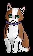 Фриц СГ (котёнок)
