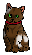 Томми (котёнок)