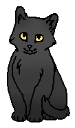 Серое Крыло (котёнок)