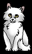 Морошка ГП (котёнок)