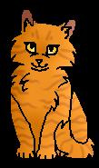 Солнцецветик (котёнок)