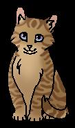 Верескоглазка (котёнок)