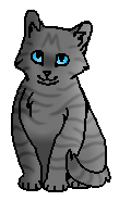 Гладкий (котёнок)