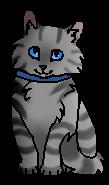 Райли.котенок