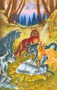 Грозовые коты оплакивают Лунницу, Пророчество Синей Звезды золото