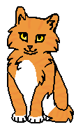Клевер (котёнок)