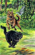 Грачик помогает Ласточке спастись от собаки, Полночь золото