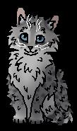 Гусохвост (котёнок)