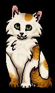 Медовушка (котёнок)