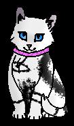 Минти (котёнок)