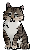 Камушек (котёнок-одиночка)