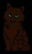 Пышечка (котёнок)
