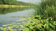 Река речного племени