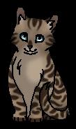 Долгохвост (котёнок)