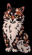 Кленовница (котёнок)