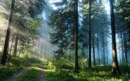 Wpapers ru Кусочек-лета-в-утреннем-сосновом-лесу