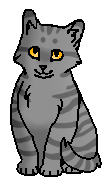 Паутинка (котёнок)