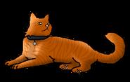 Домашний кот (ЗЛ)