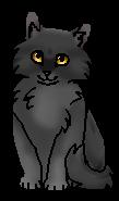 Ветерок (котёнок) Ураган