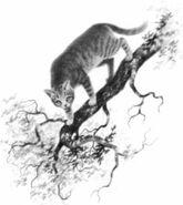 Зяблик Падение-с-неба Битвы племён англ