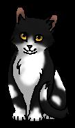 Лучик (котёнок)