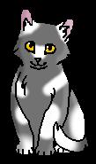 Белый Хвост (котёнок)