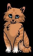 Фиалка (котёнок)