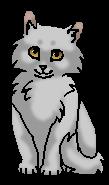 Кривуля котёнок