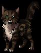 Pheasanttail.kitten