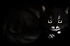 Eiríkr.kitten