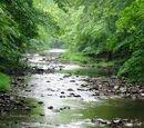 LightingClan's River