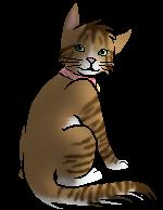 Princess.kittypet
