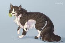 Ned cat