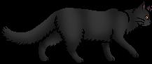 Tansy (cat)