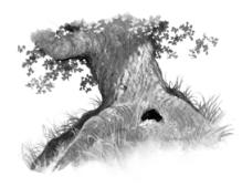 The Sky Oak
