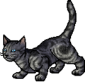 Jayfeather.apprentice.png