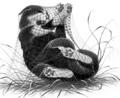 Rabbittail.FG-4