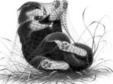 Rabbittail