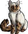 Comet the Cat.personal.png