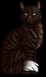 I am a felis catus.personal