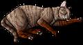 Sandynose.kittypet