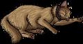 Algernon.kittypet