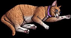 Violet (KP)