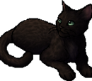 Leopardfoot