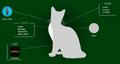 Ivypool.Website
