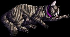 Victor.kittypet
