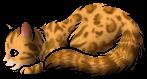 File:Leopardstar.kit.png
