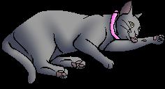 Ruby.kittypet